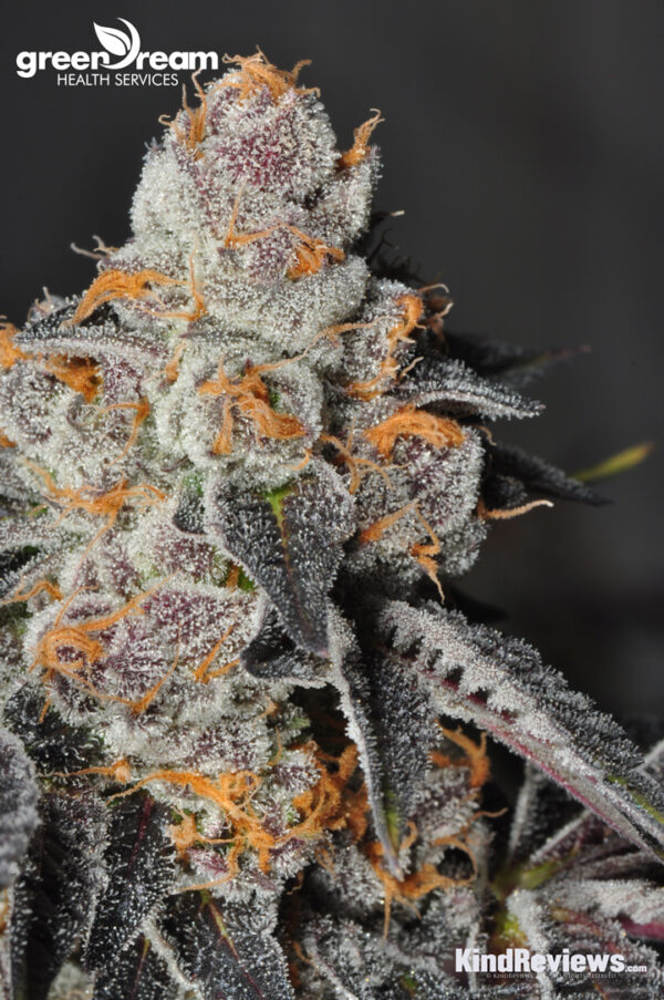 GirlScoutCookies_GDHS_Apr2014DSC_0105