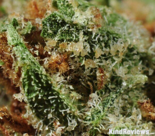 Buy snoop master kush | Order marijuana online | Buy weed in USA