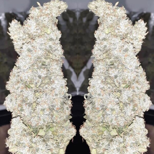Buy white Russian weed